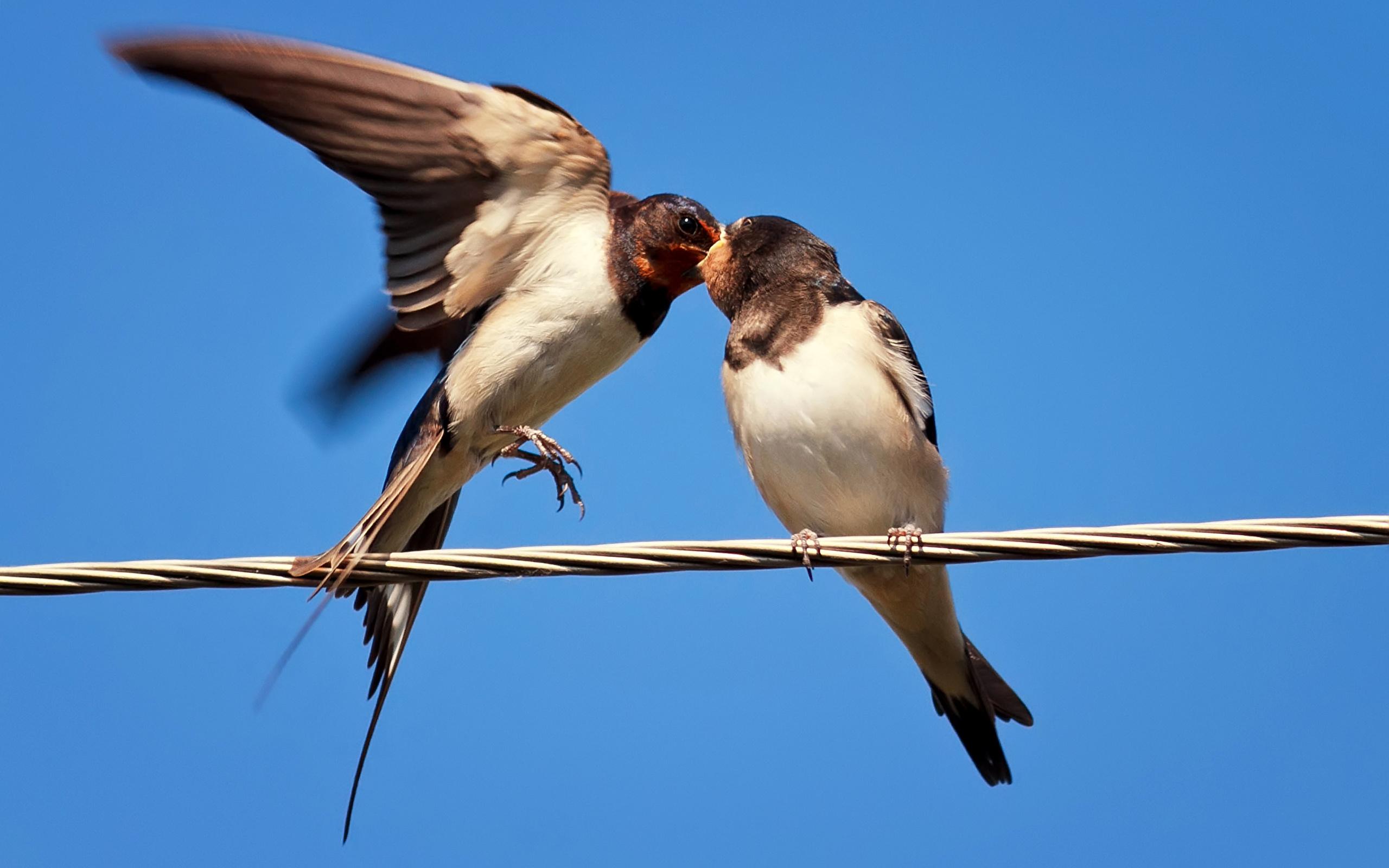 Најнов проект на ЕВН Македонија за заштита на птиците од струен удар
